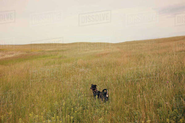 Dog standing on grassy field against sky Royalty-free stock photo