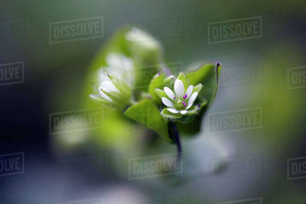 Close-up of white flower at park Royalty-free stock photo