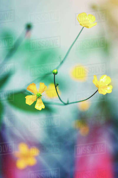 Close-up of yellow flowers blooming at park Royalty-free stock photo