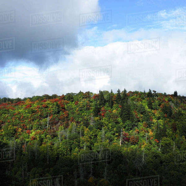 Scenic view of trees growing at Blue Ridge Parkway against cloudy sky Royalty-free stock photo