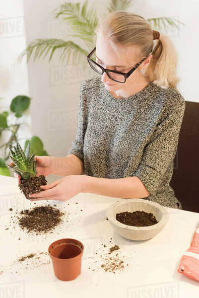 High angle view of businesswoman making houseplant at desk in creative office Royalty-free stock photo