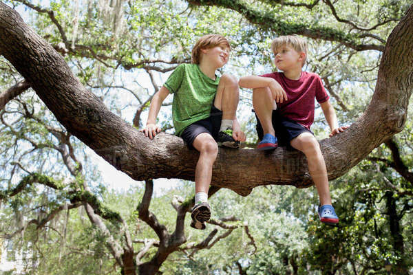 Low angle view of brothers sitting on branch at park Royalty-free stock photo