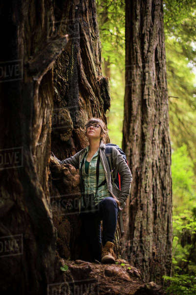 Female hiker looking up while standing by tree at Redwood National and State Parks Royalty-free stock photo