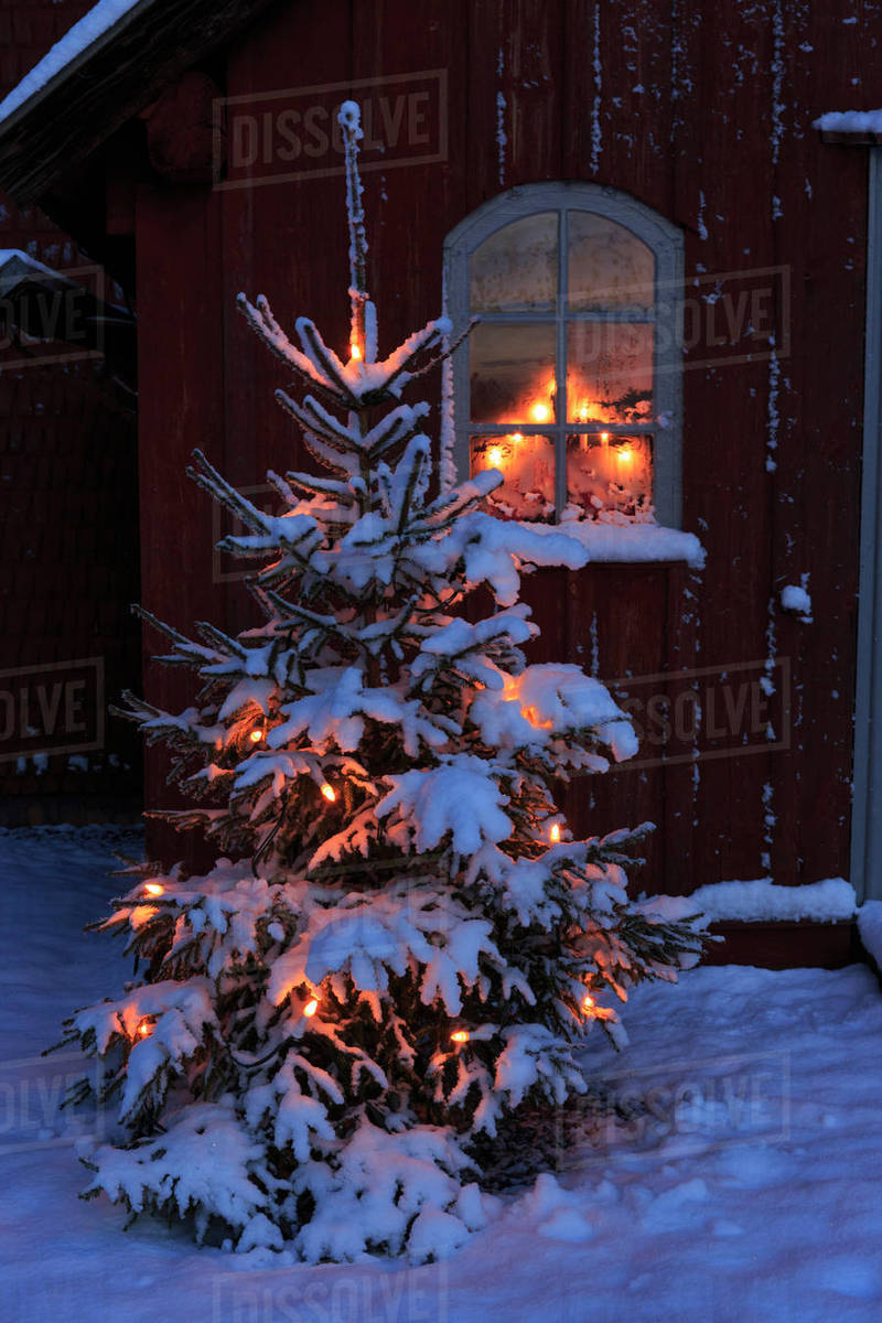 Christmas tree with snow by window of Skagershult Church ...