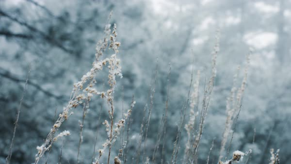 Tall grass covered in snow Royalty-free stock video
