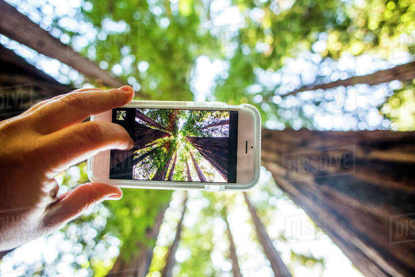Low angle view of cell phone taking photograph of trees in forest Royalty-free stock photo