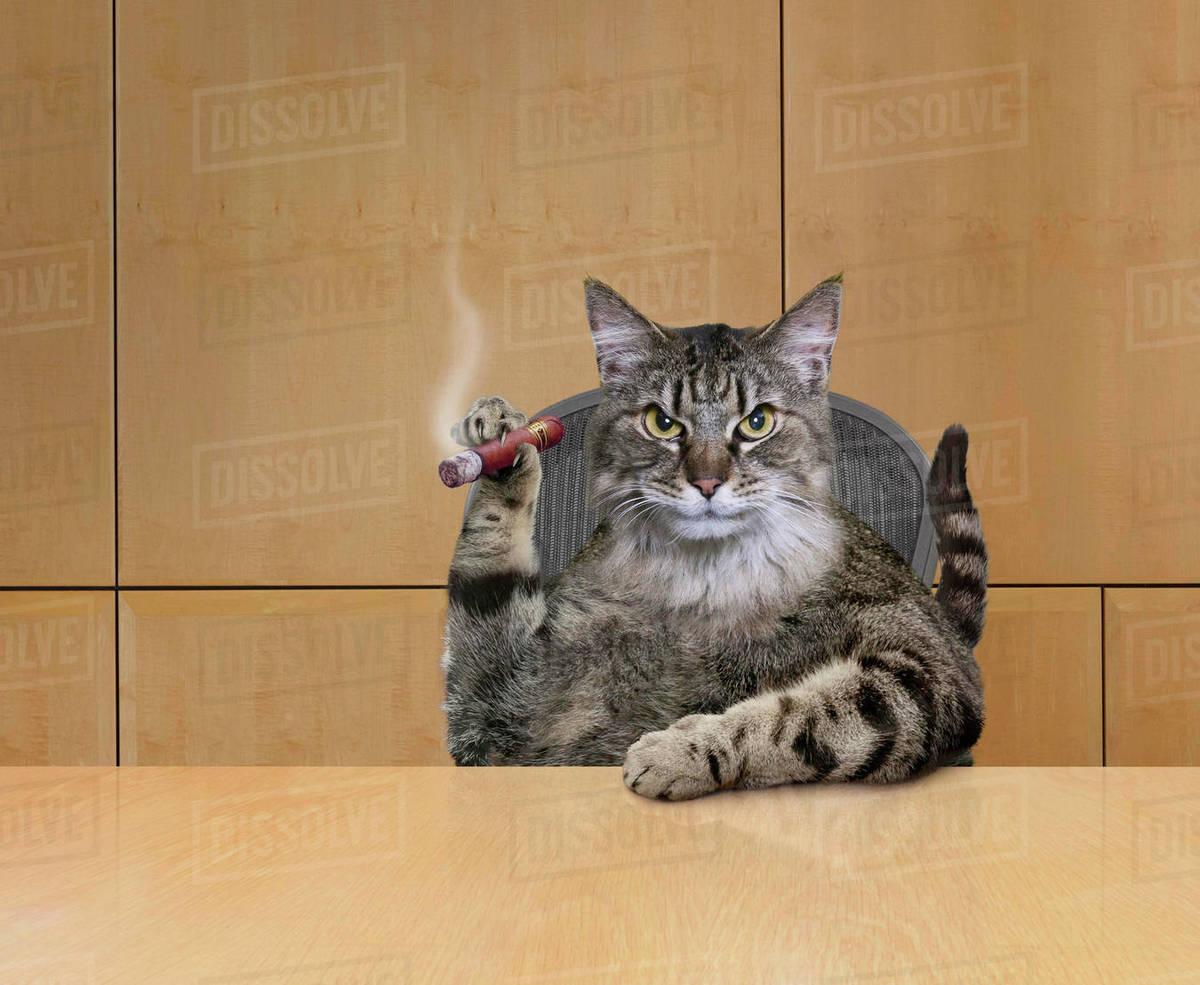 Cat Smoking Cigar In Office
