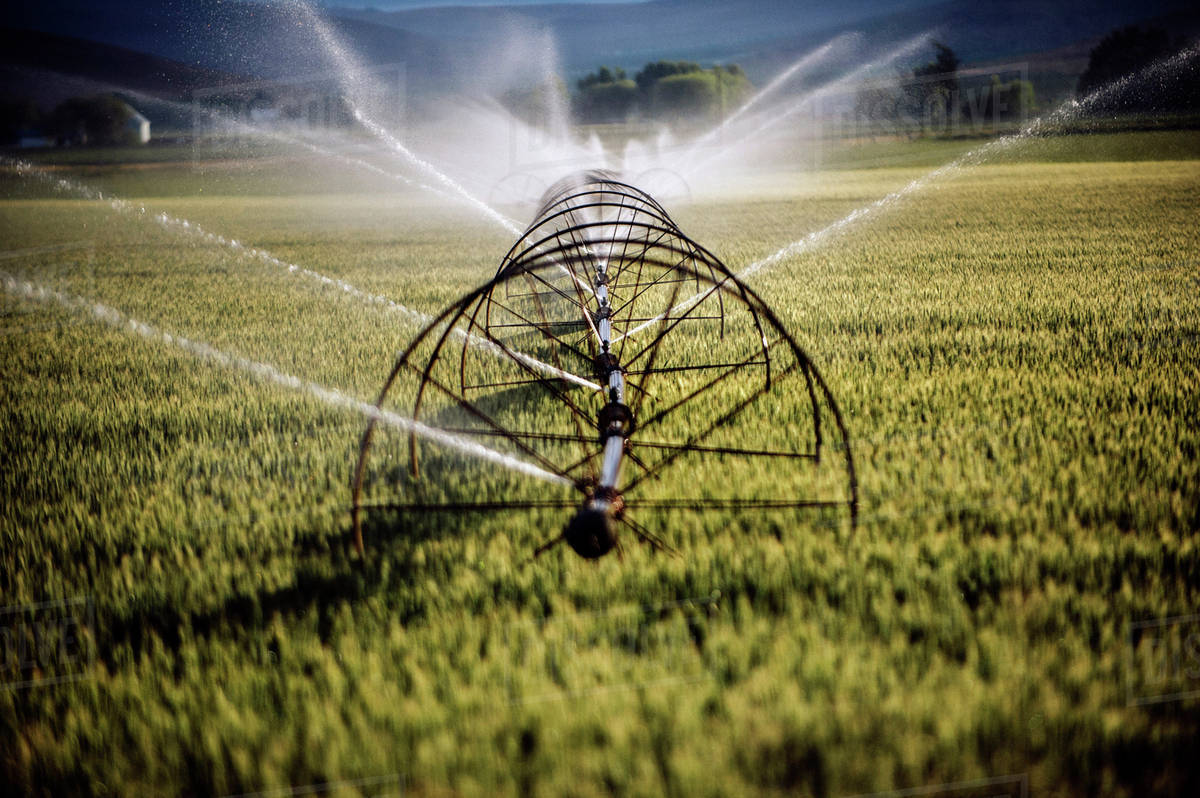 Irrigation system watering crops on farm field stock photo