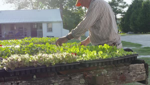 Hand-held shot of a man examining seedlings planted in small pots Royalty-free stock video