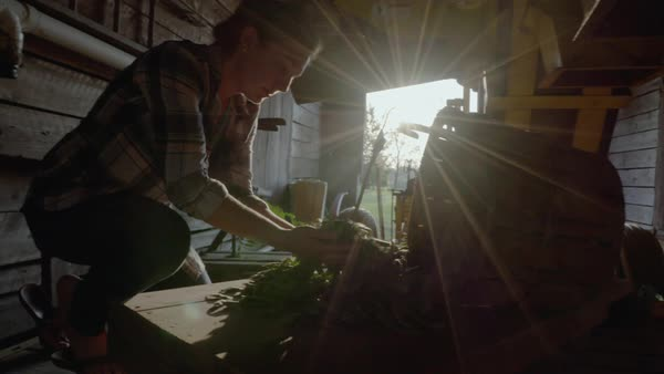 Hand-held shot of a female farmer examining harvested peas in a barn Royalty-free stock video