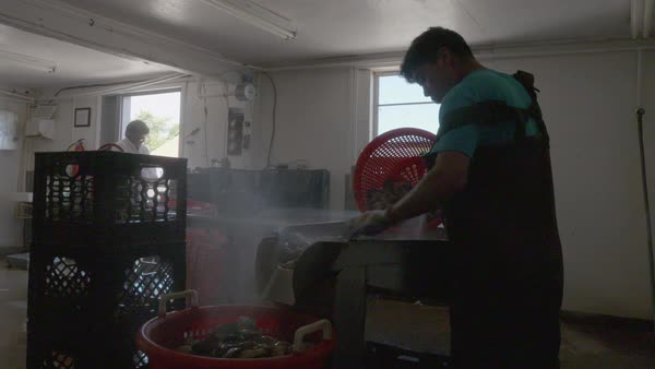 Hand-held shot of a man washing oysters with a hose Royalty-free stock video