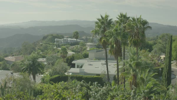 Wide shot of a Los Angeles neighbourhood with trees and greenery Royalty-free stock video