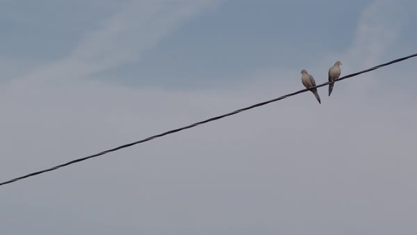 Low angle shot of a pair of birds perching on power line and flying away, blue sky in background Royalty-free stock video