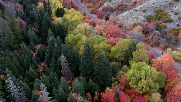 Flying over fall colors in canyon making way towards road in the bottom Royalty-free stock video