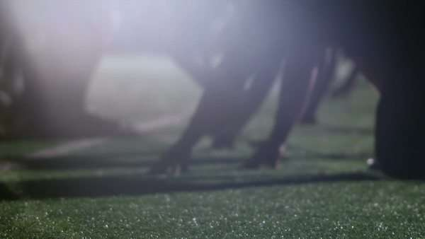 Close up view of football player's hands on the ground ready to snap the ball Royalty-free stock video