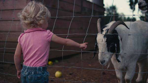 A cute little girl talking to goats through a fence on a farm Royalty-free stock video