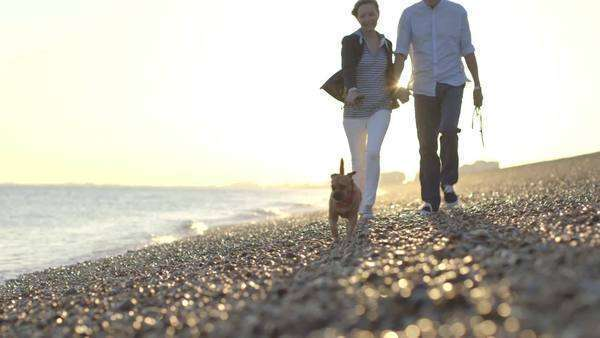 Retired Senior Couple walking on beach with dogs Royalty-free stock video