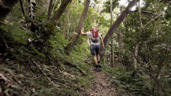 Man hiking in jungle Royalty-free stock video