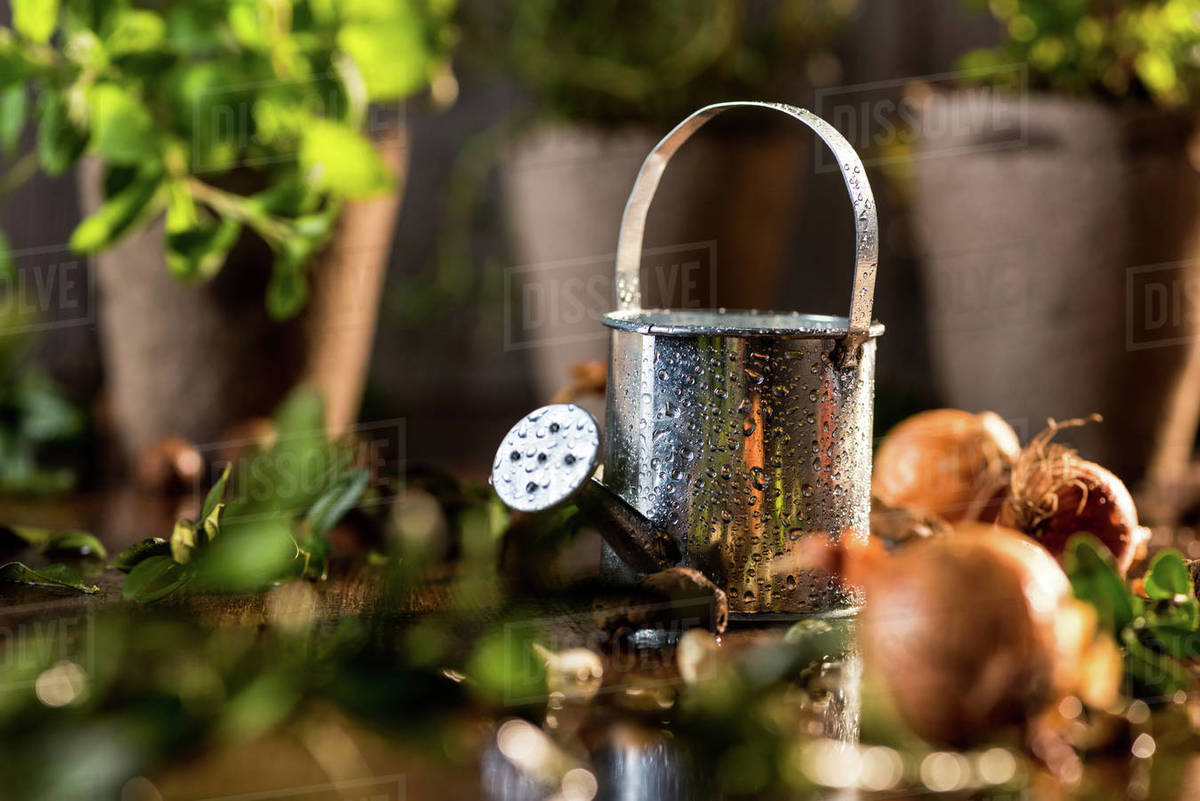 Little Watering Can And Diffe Herbs Behind On Wooden Table Garden Scene Concept