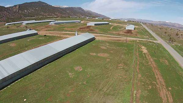 Aerial rural turkey farm growing sheds agriculture. Aerial flight over rural agriculture turkey growing sheds. Royalty-free stock video