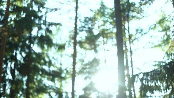 Tilting movement stopping at tranquil scene of green forest ground with trees and spider webs Royalty-free stock video