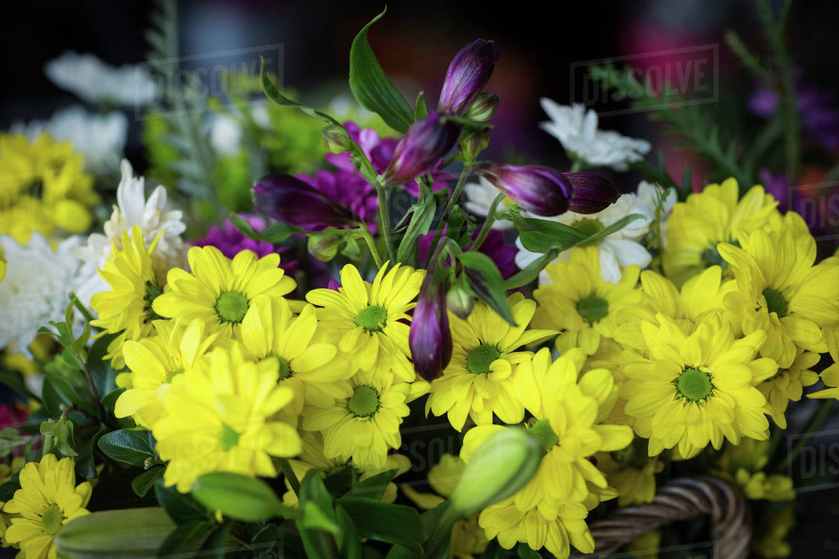 Close up of beautiful yellow flowers in the flower shop stock close up of beautiful yellow flowers in the flower shop izmirmasajfo