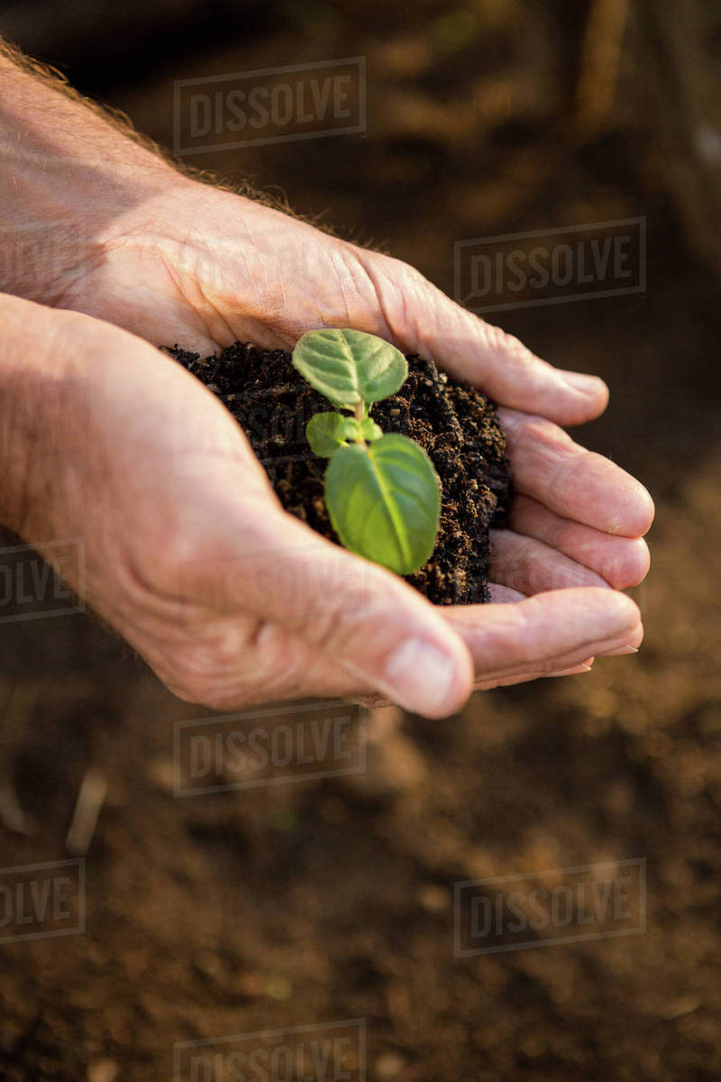 cropped image of seedling and dirt in cupped hands at garden - Garden Dirt