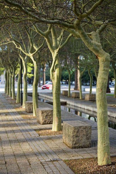 Tree lined pathway through a park on a sunny day Royalty-free stock photo