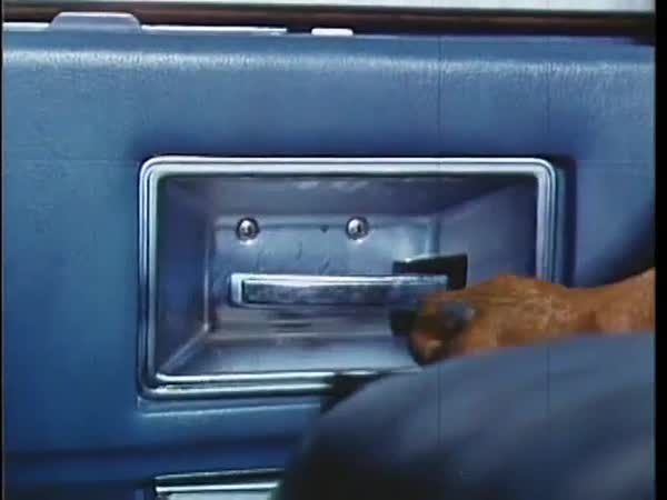 Doberman Pinscher letting himself out of car, 1970s Royalty-free stock video