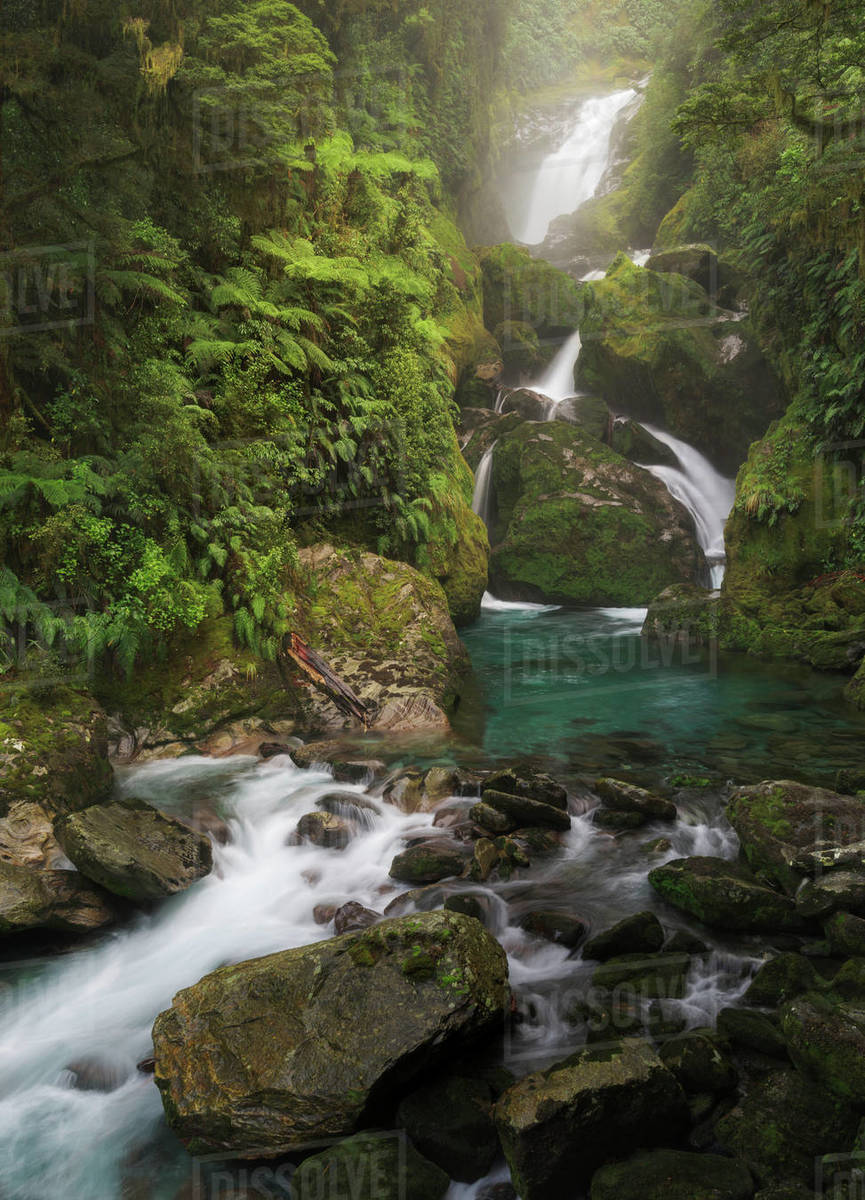 Mackay Falls Along The Milford Track Fiordland National Park In D246 100 604