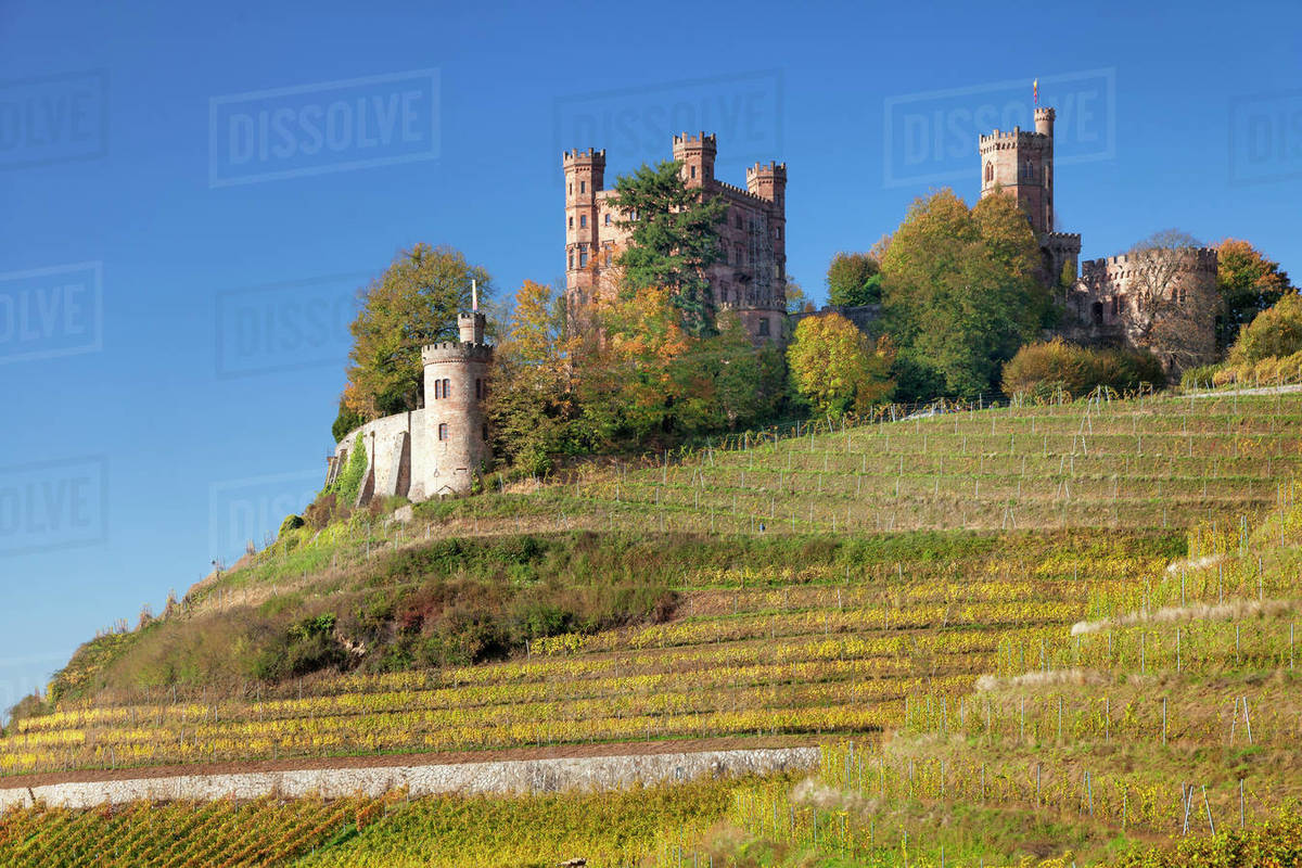 Ortenberg Castle and vineyards in autumn, Offenburg, Black Forest, Baden-Wurttemberg, Germany, Europe Royalty-free stock photo
