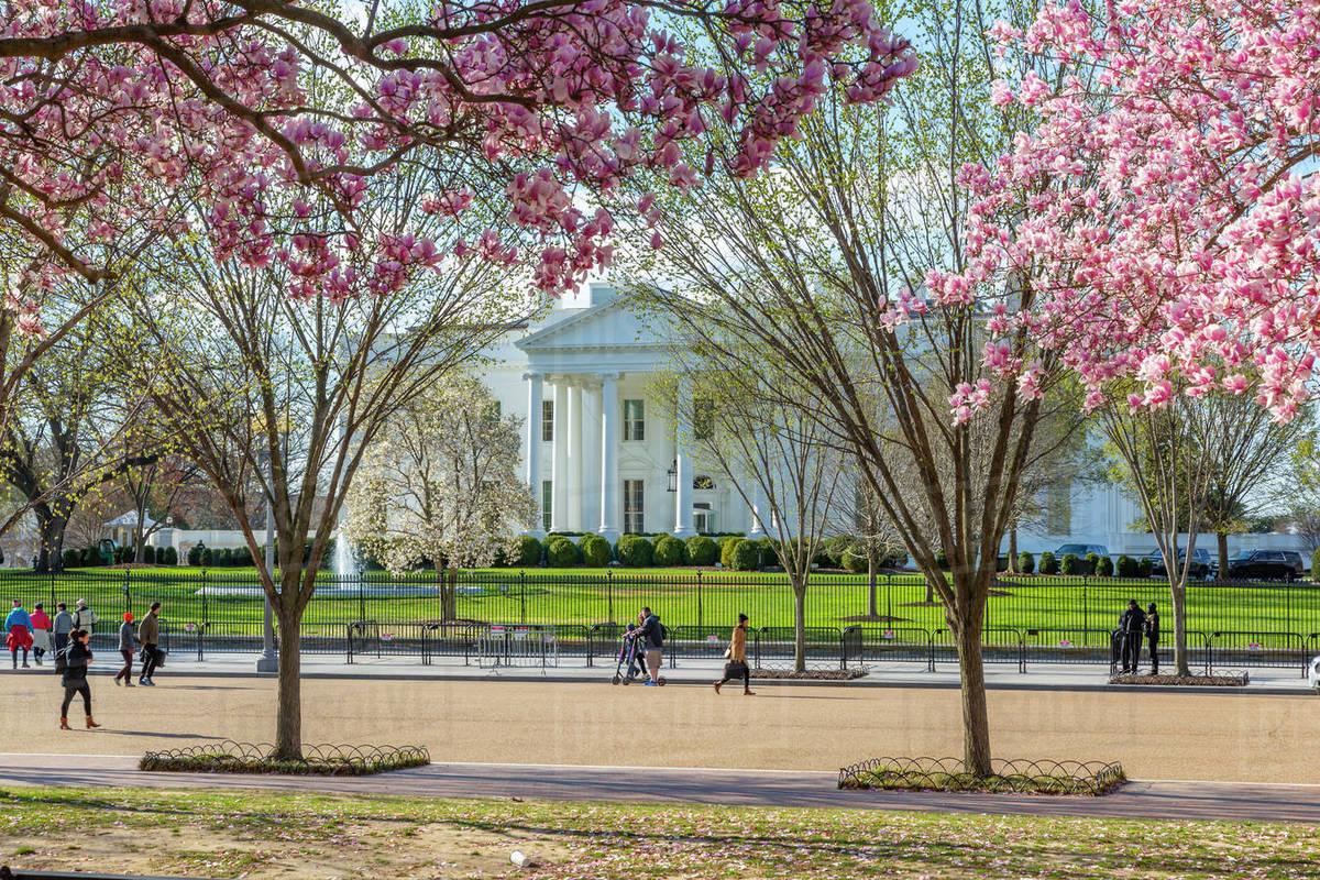 View of The White House and spring blossom in Lafayette Square, Washington D.C., United States of America, North America Royalty-free stock photo