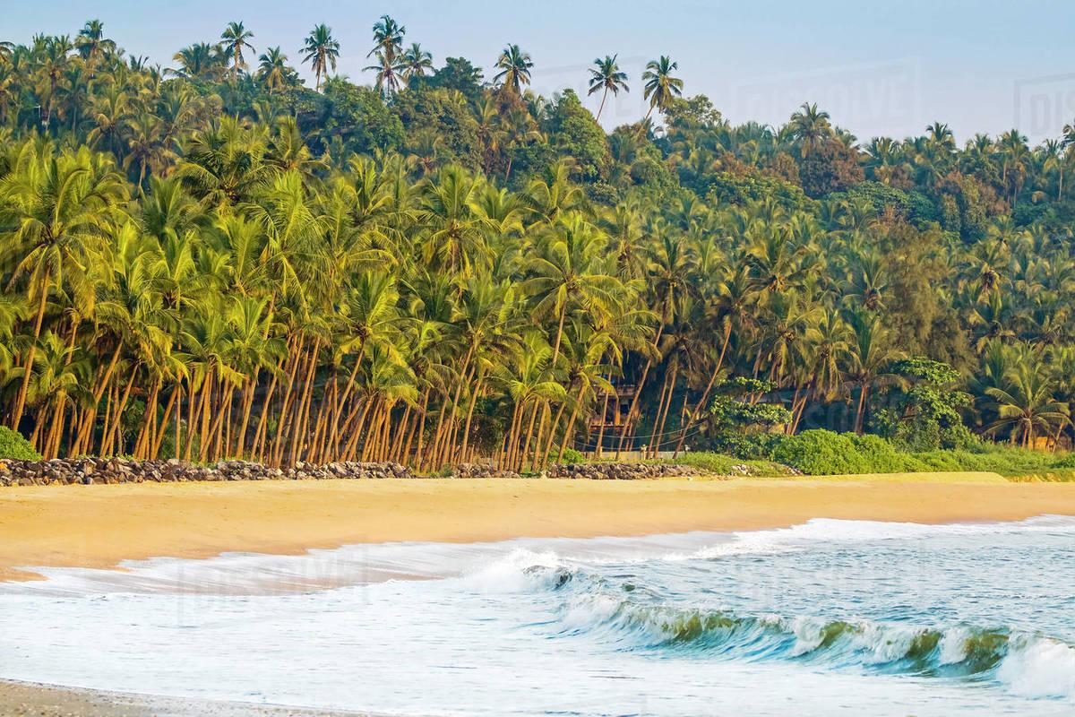 Beautiful palm fringed Kizhunna Beach, south of Kannur on the Kerala north coast, Kannur, Kerala, India, Asia Royalty-free stock photo