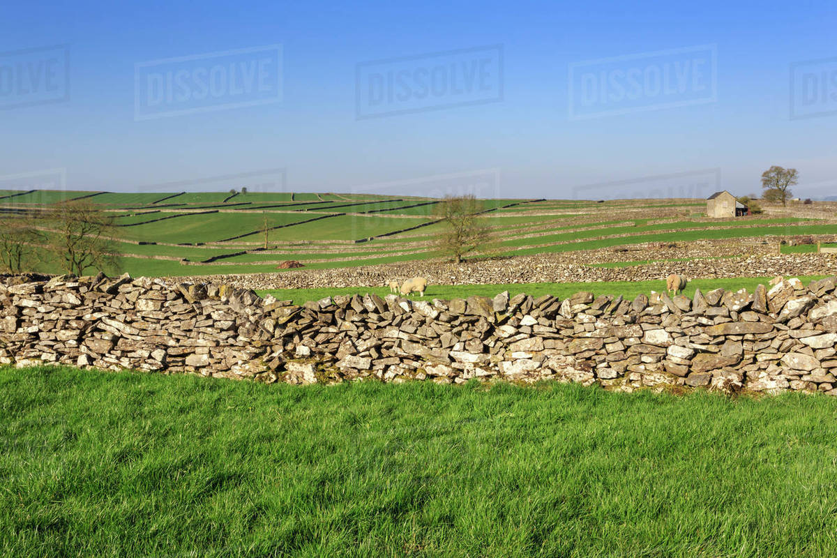 Typical Spring Landscape Of Barn Sheep Fields Dry Stone Walls And Hills Litton Peak District Derbyshire England United Kingdom Europe