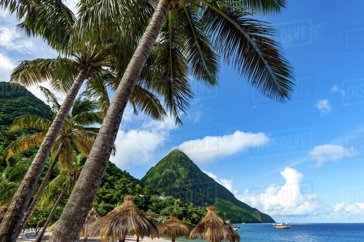 Gros Piton With Palm Trees And Thatched Sun Umbrellas Sugar Beach St Lucia Windward Islands West Ins Caribbean Central America