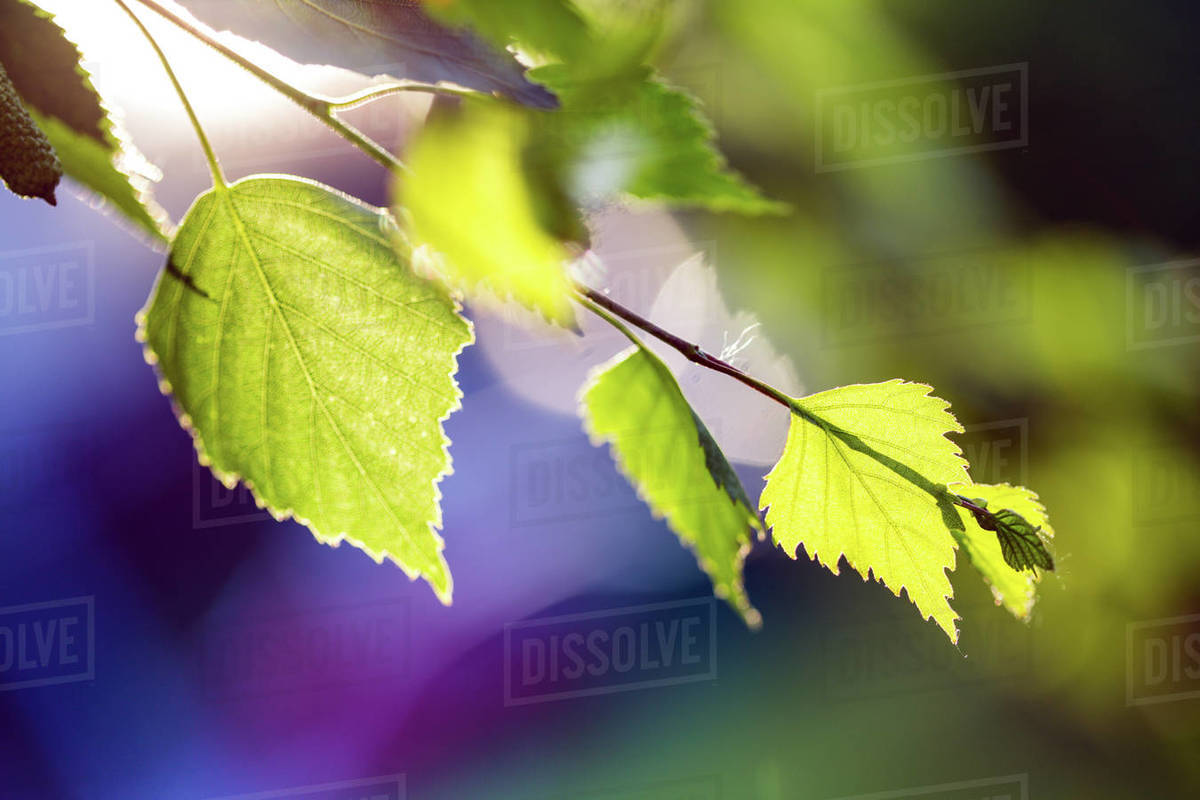 Tree branch with buds background, spring Royalty-free stock photo