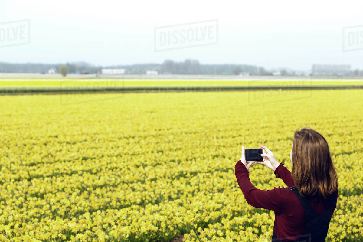 Girl takes pictures of a yellow narcissus on a smartphone. trip to the netherlands in spring Royalty-free stock photo