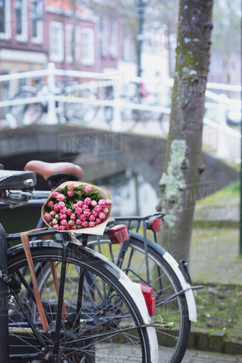 Bouquet of beautiful pink tulips lie on the trunk of the bike. Amsterdam.  trip to the netherlands in spring Royalty-free stock photo
