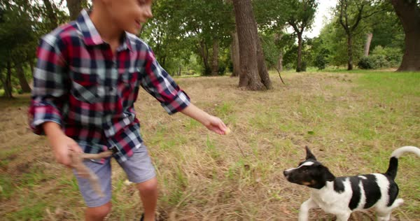 Little boy and dog playing with stick together in park. The two mischievous friends running around Royalty-free stock video