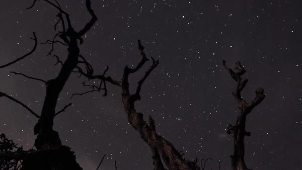 Night sky star timelapse with silhouette of dead tree Royalty-free stock video