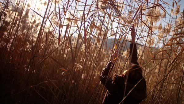 Excited woman having fun in sugar cane field in winter Royalty-free stock video