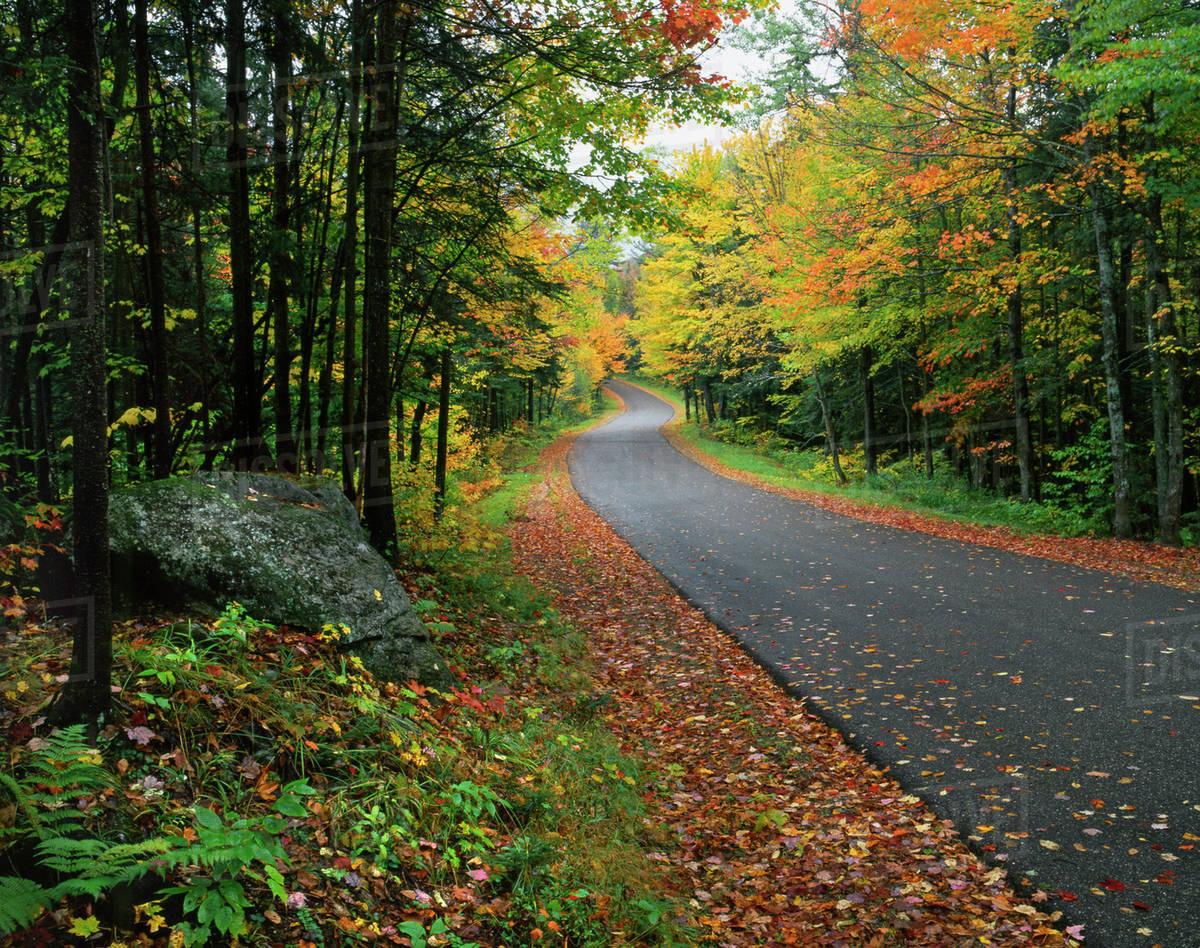 USA, New York, Adirondack Mountains. Autumn-colored trees line road ...