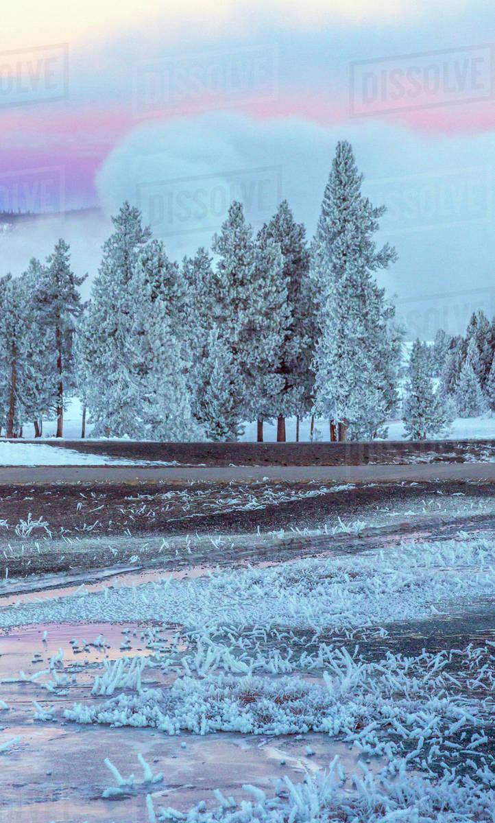 Usa Wyoming Yellowstone National Park Winter Scenic D256 24 460