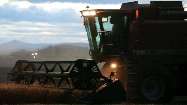 Wheat harvest at sunset near Polson, Montana, USA Rights-managed stock video