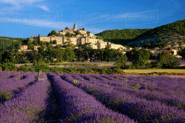 Sunrise over lavender field and the village of Banon in the Vaucluse, Provence, France. Rights-managed stock photo