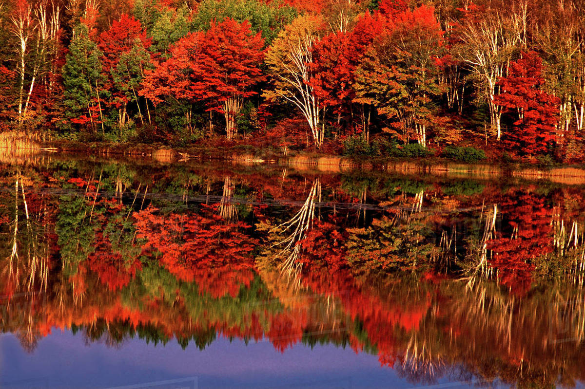 United States, Michigan, Upper Peninsula. Fall color reflected in Thornton  Lake. - Stock Photo - Dissolve