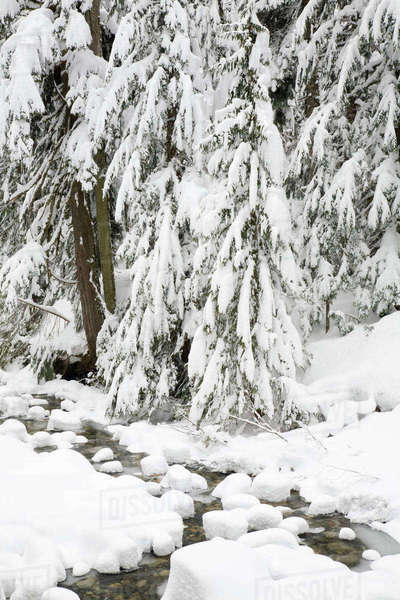 WA, Mount Baker Snoqualmie National Forest, South Fork Snoqualmie River, with a mantle of fresh snow Rights-managed stock photo