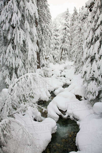 WA, Mount Baker Snoqualmie National Forest, Denny Creek, with a mantle of fresh snow Rights-managed stock photo