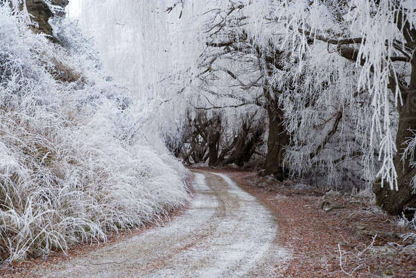 Hoar Frost and Road by Butchers Dam, near Alexandra, Central Otago, South Island, New Zealand Rights-managed stock photo