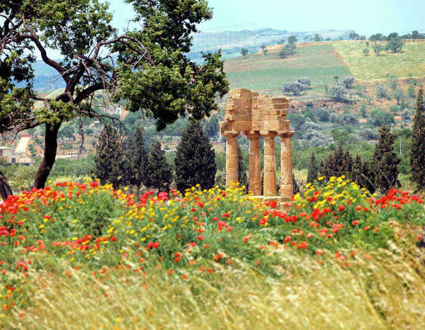 Italy, Sicily, Agrigento. The ruins of the Temple of the Dioscurs at Agrigento, a World Heritage Site, in Sicily, Italy, sits amid colorful red poppies. Rights-managed stock photo